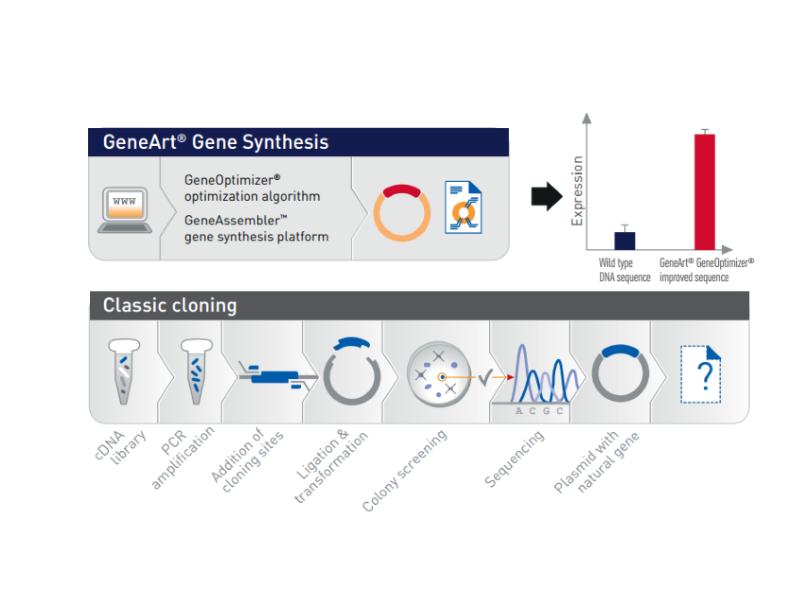 บริการสังเคราะห์ดีเอ็นเอ (DNA synthesis) GeneArt Servic
