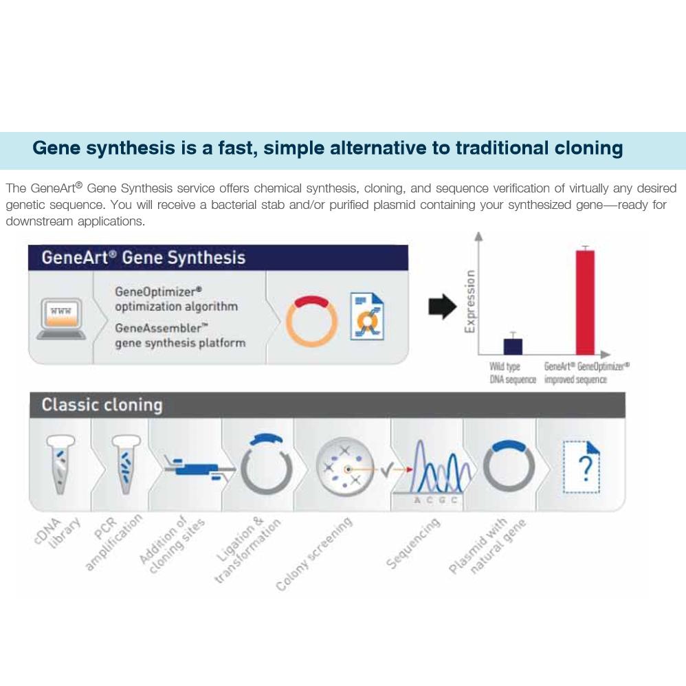 GeneArt Gene Synthesis service