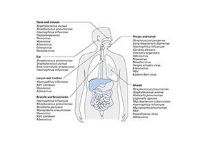 การตรวจหาเชื้อก่อโรคระบบทางเดินหายใจ 33 สายพันธุ์