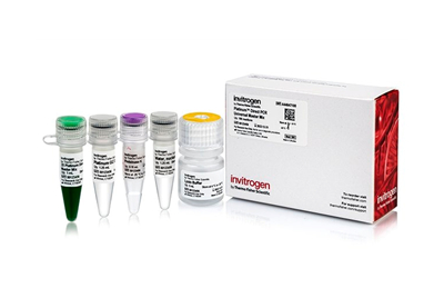 Platinum™ Direct PCR Universal Master Mix