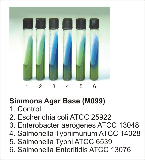 SIMMONS CITRATE AGAR, 500 G.