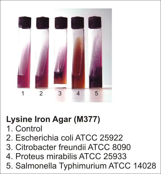 LYSINE IRON AGAR, 500 G.